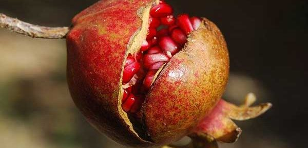 Pomegranate for ED